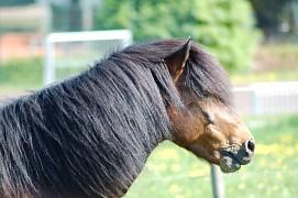 Der Wiesenhof - Islandpferde Marxzell