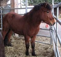 www pferdenamen de: